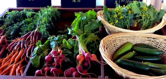 Get Your Fresh Veggies at Copper Moose Farm Stand