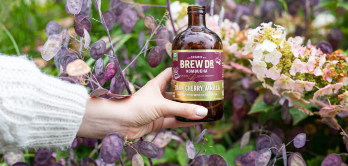 Drink to Your Health: Organic Kombucha at Townshend's Tea